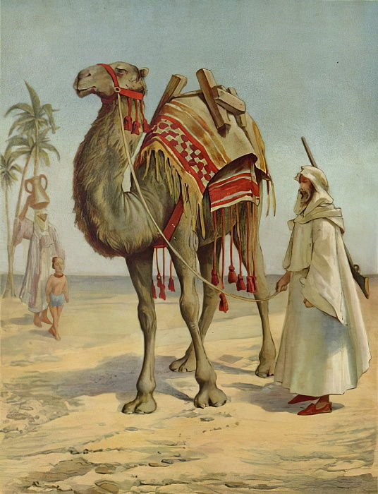 An Arab Merchant  by English School