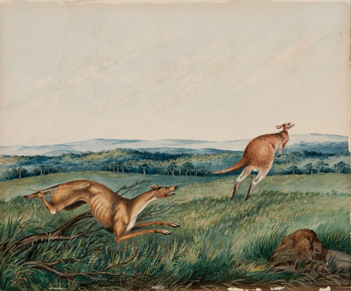 Dog chasing a kangaroo by Adam Gustavus Ball