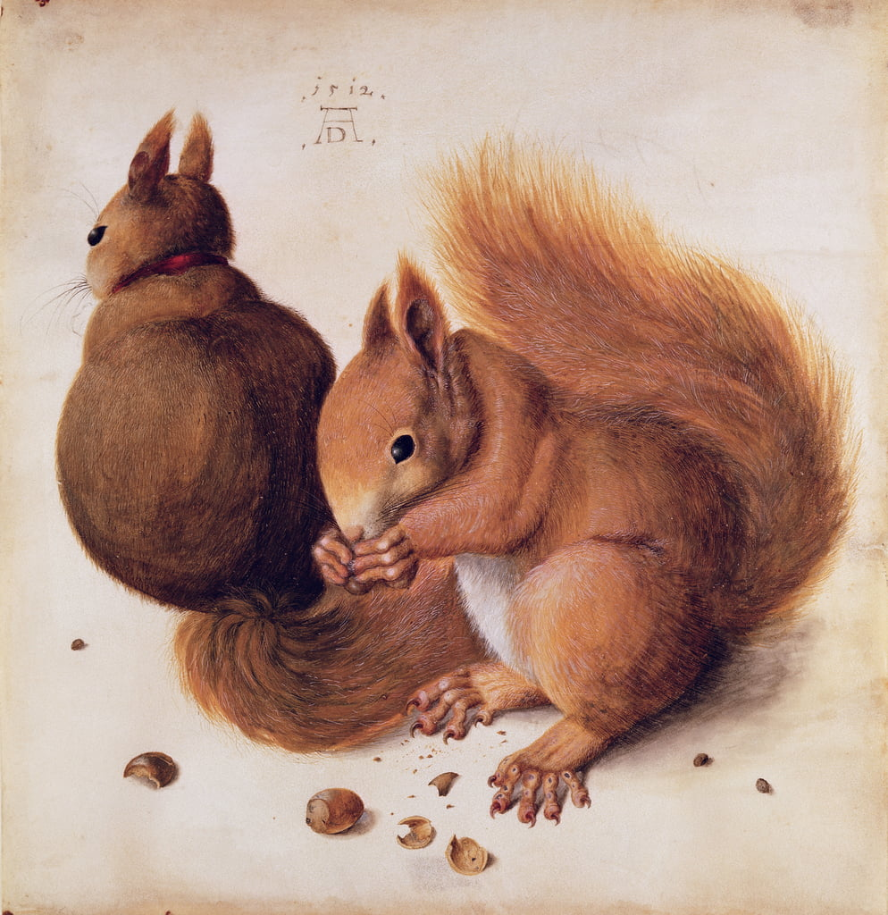 Squirrels, 1512 (tempera on parchment) by Albrecht Dürer