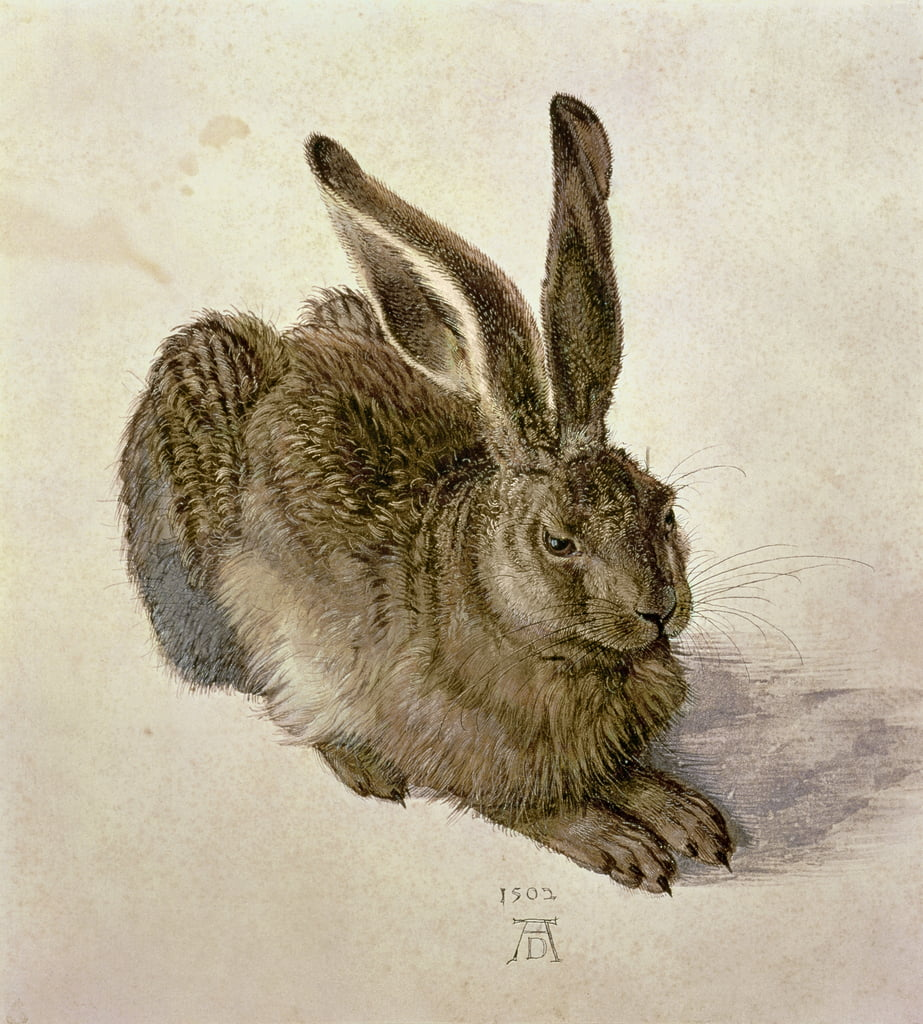 Young Hare by Albrecht Dürer