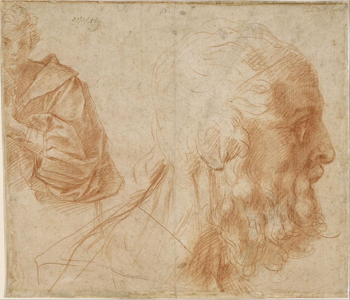 Sheet of studies with a youth and the head of an old man looking to the right by Andrea del Sarto