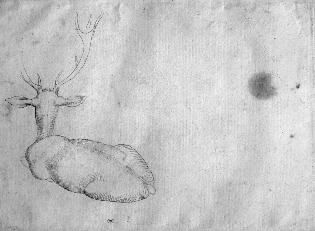 Resting stag, seen from behind, from the The Vallardi Album   by Antonio Pisanello