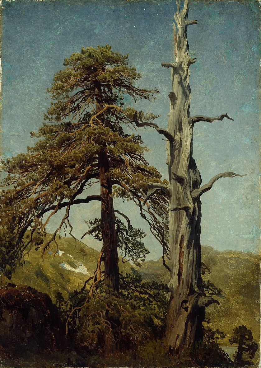 Study of Trees by August Cappelen