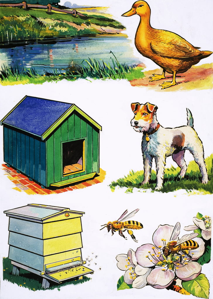 Animals and Their Homes by English School