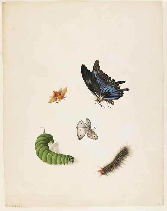 Insects, c.1805 (black ink & wc on paper) by English School