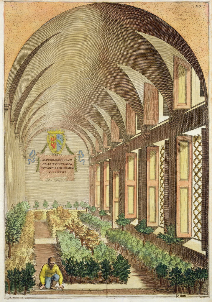 Citrus trees in a hothouse, from