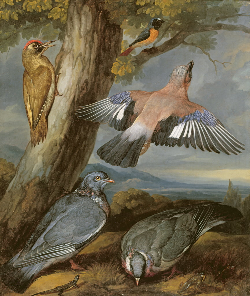 Jay, Green Woodpecker, Pigeons and Redstart, c.1650  by Francis Barlow