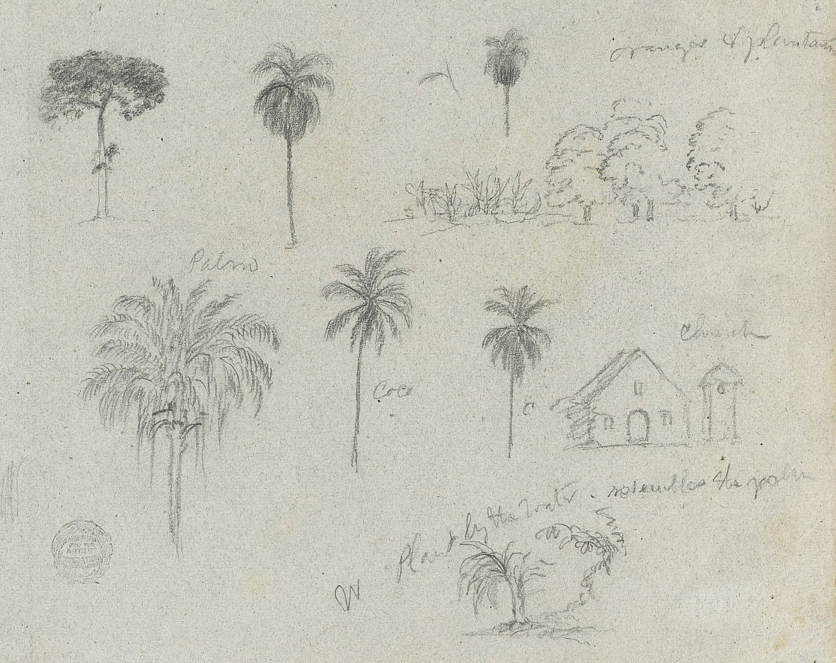 Sketches from the Rio Magdalena, Colombia. Botanical sketches. A church. Similar to -103. by Frederic Edwin Church