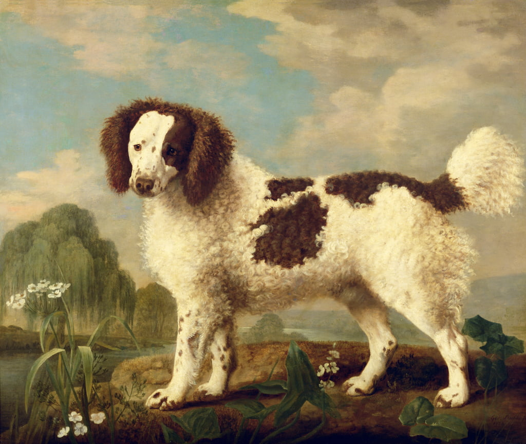 Brown and White Norfolk or Water Spaniel, 1778  by George Stubbs