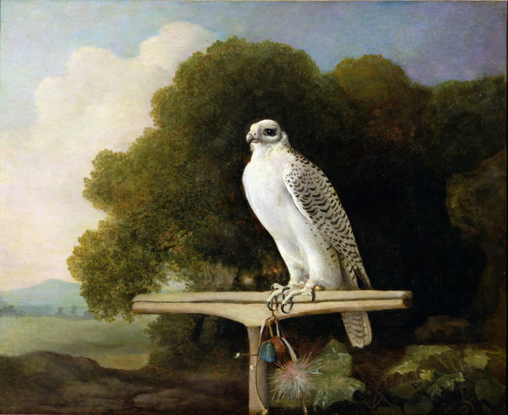 Greenland Falcon (Grey Falcon), 1780  by George Stubbs
