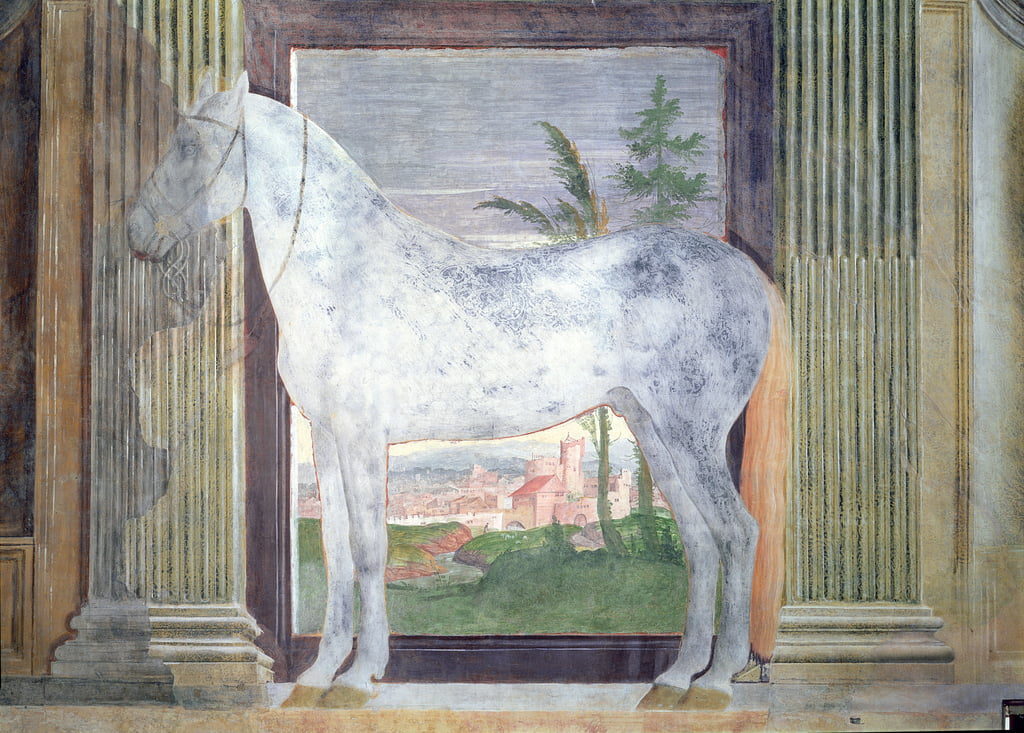 Sala dei Cavalli, detail showing a portrait of a grey horse from the stables of Ludovico Gonzaga III of Mantua, 1528  by Giulio Romano