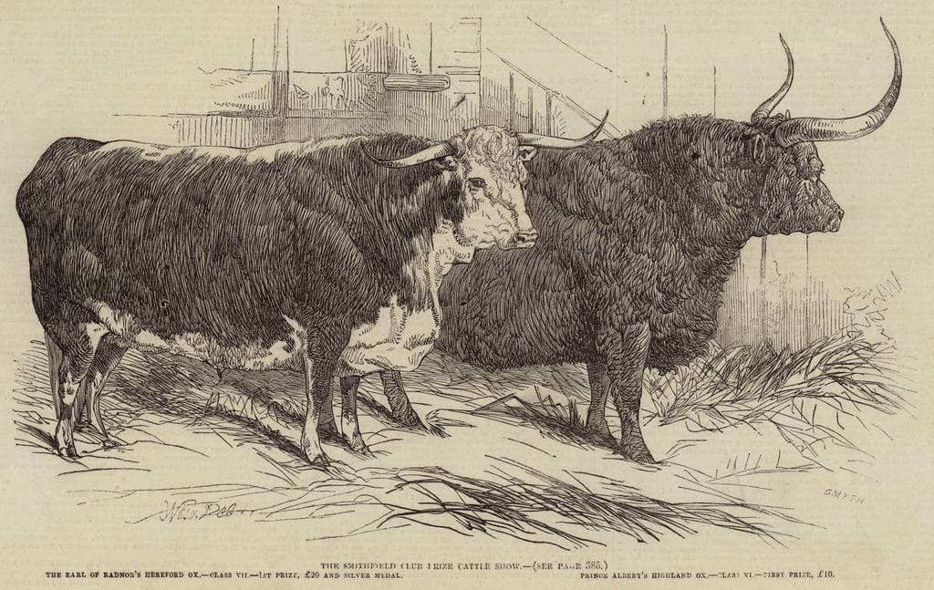 The Smithfield Club Prize Cattle Show  by Harrison William Weir