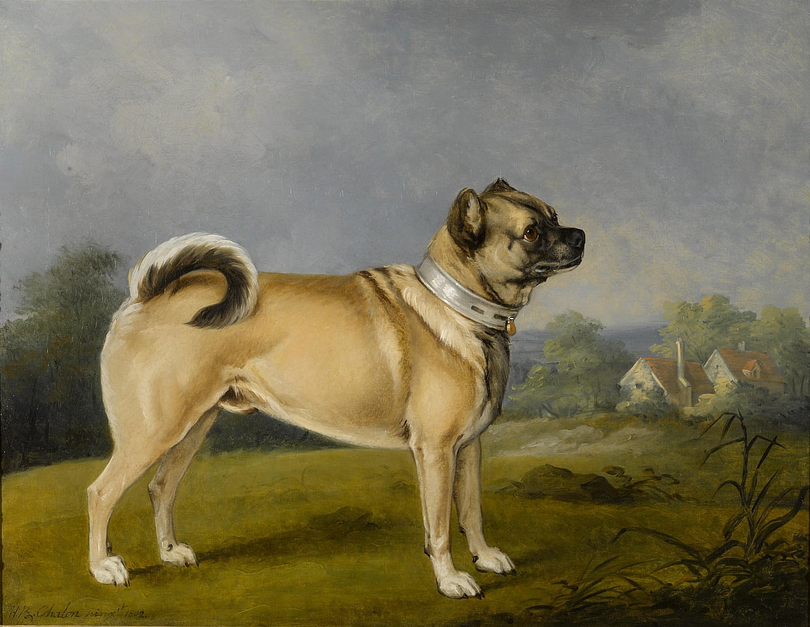 A favorite pug by Henry Bernard Chalon