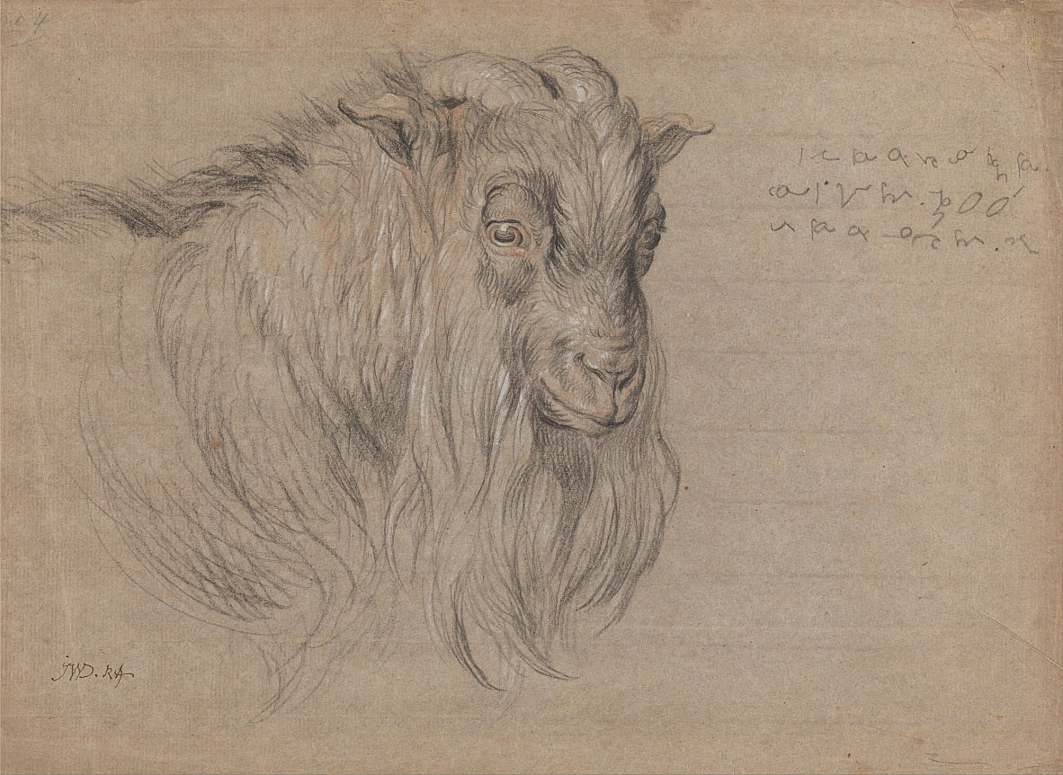 Study of the Head of a Ram by James Ward