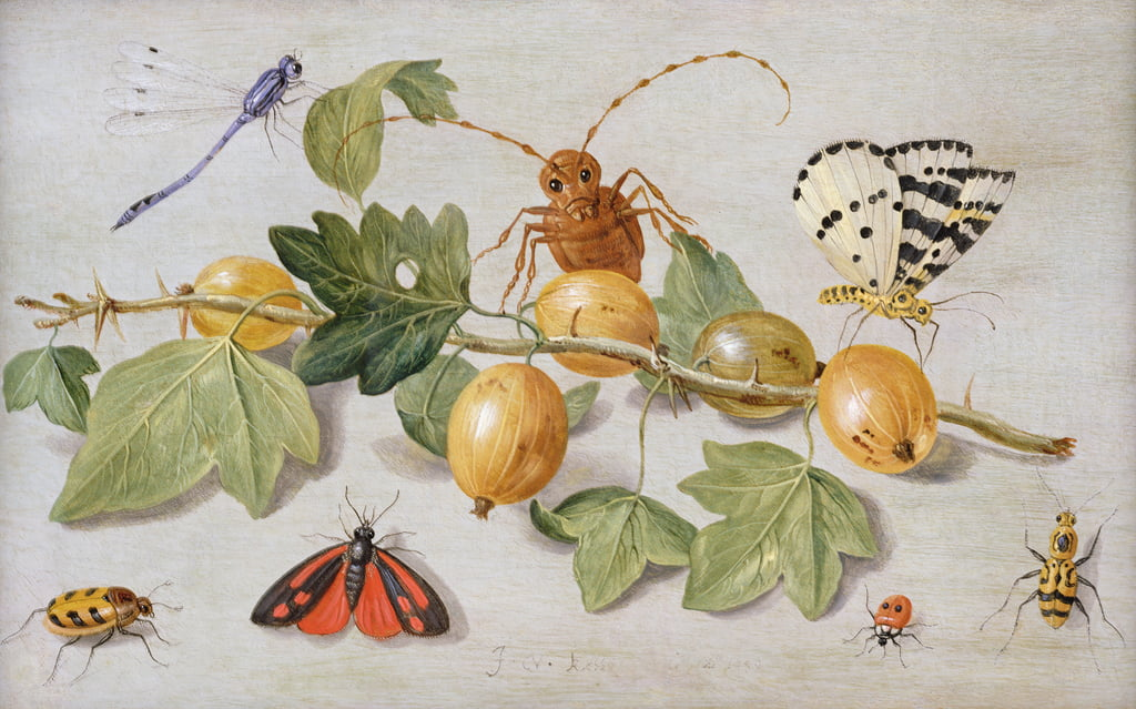 Still life of branch of gooseberries, with a butterfly, moth, damsel fly and other insects (oil on copper) by Jan van Kessel the Elder