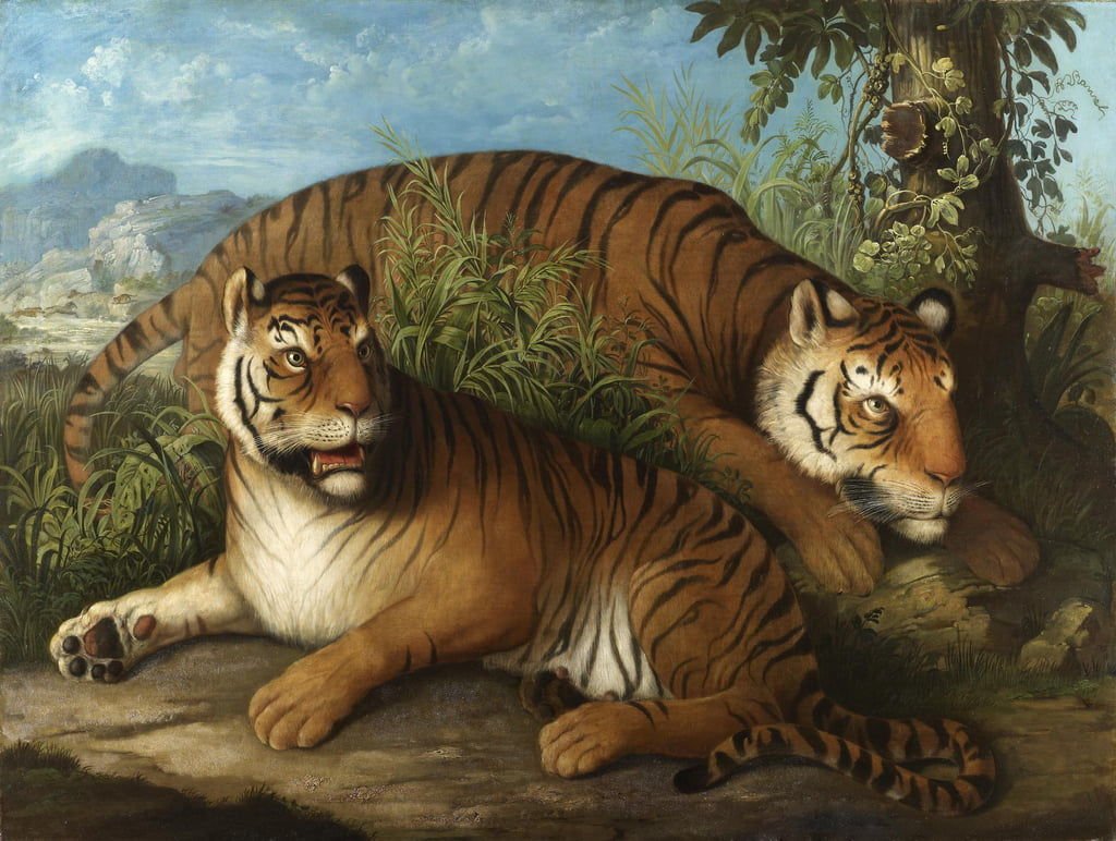Royal Bengal Tigers  by Johan Wenzel Peter