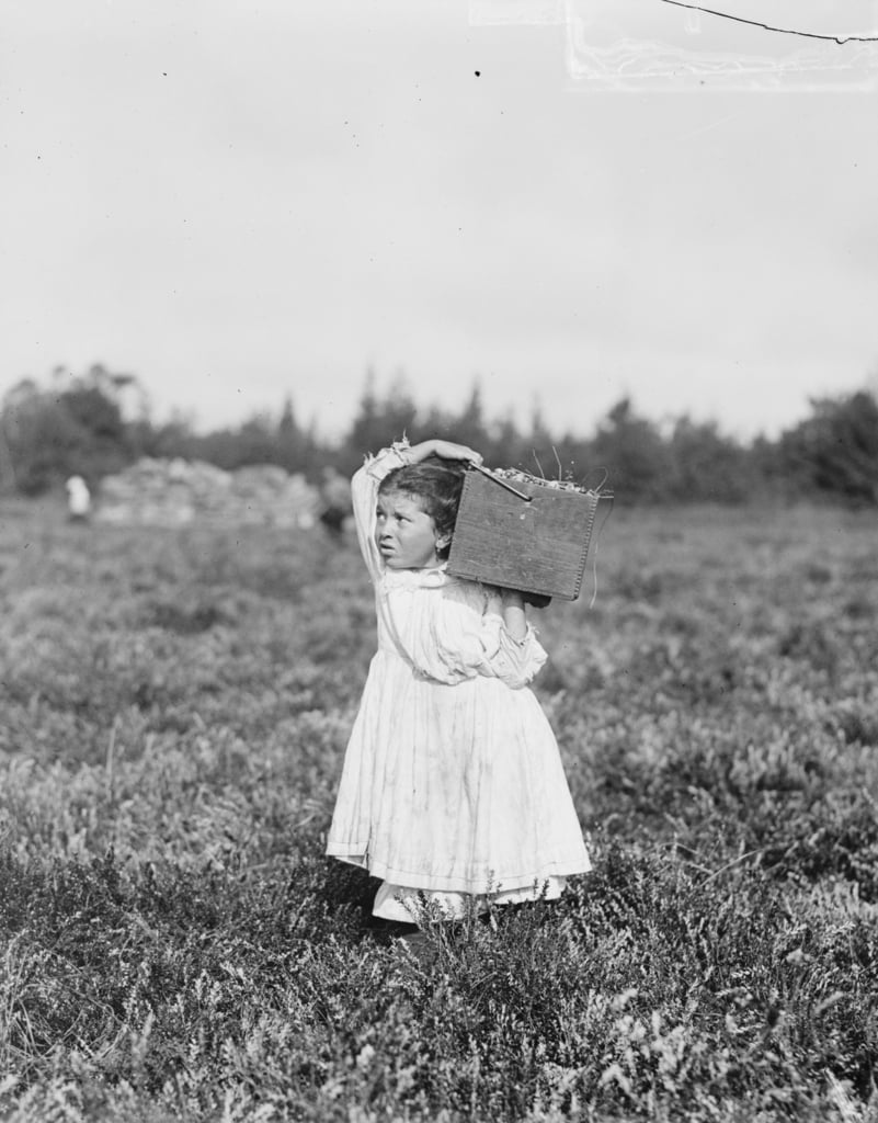 Eight year old Jennie Camillo from Philadelphia picking cranberries at Theodore Budd