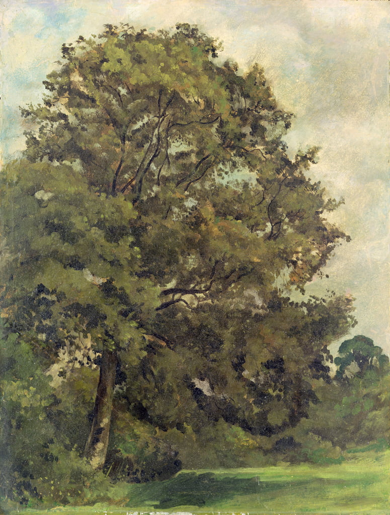 Study of an Ash Tree, c.1851 (oil on paper on panel) by Lionel Constable