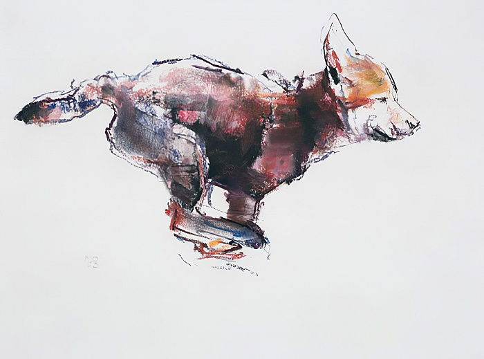 Running wolf pup (charcoal und conte on paper) by Mark Adlington