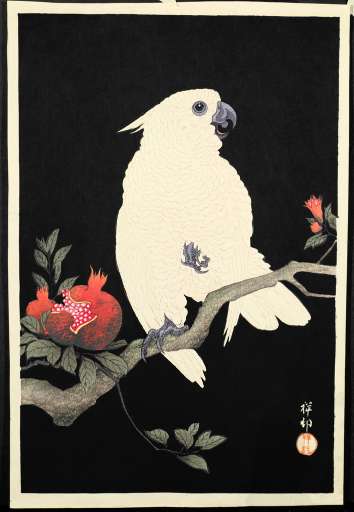 Cockatoo and pomegranate, (colour woodblock print) by Ohara Koson