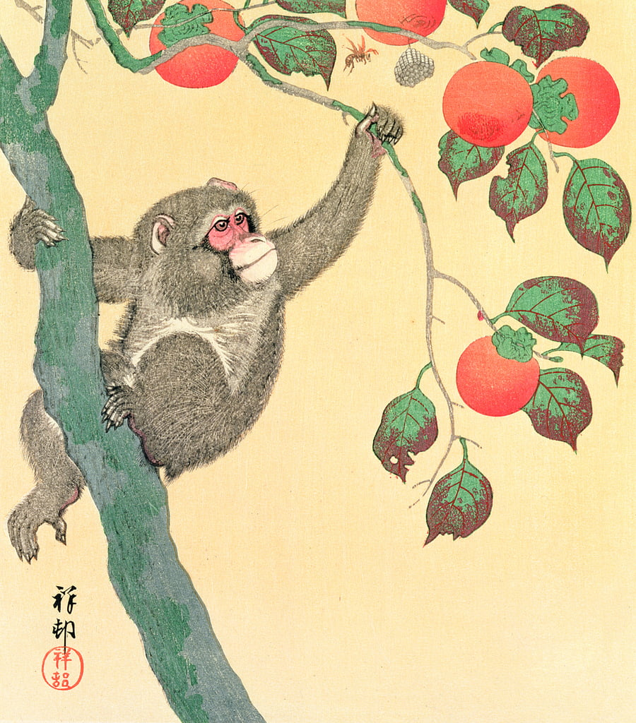 Monkey in a Persimmon Tree, 1935 (woodblock colour print) by Ohara Koson