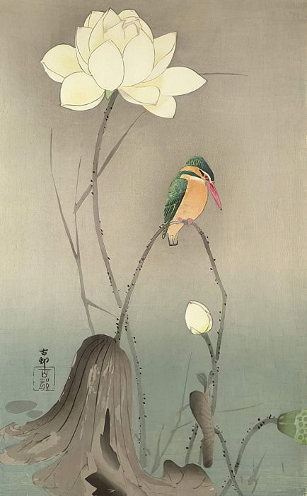 A Kingfisher and a lotus, c.1910,  by Ohara Koson