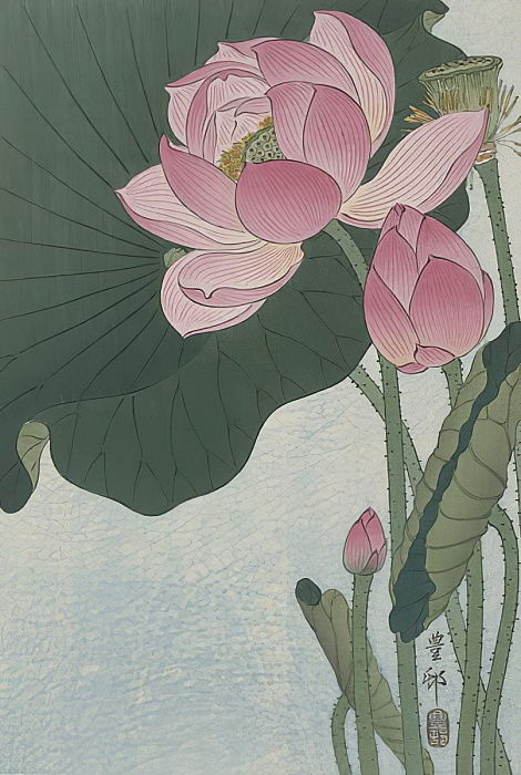 Blooming lotus flowers, 1920-30 (colour woodcut) by Ohara Koson
