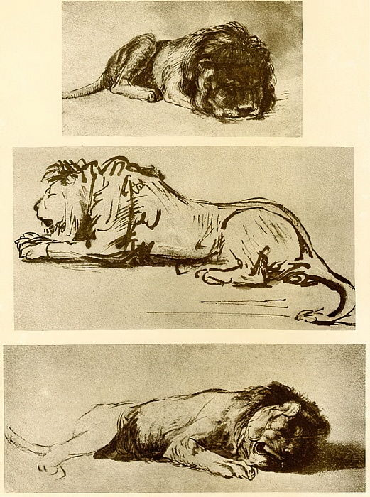 Three lion studies by Rembrandt van Rijn
