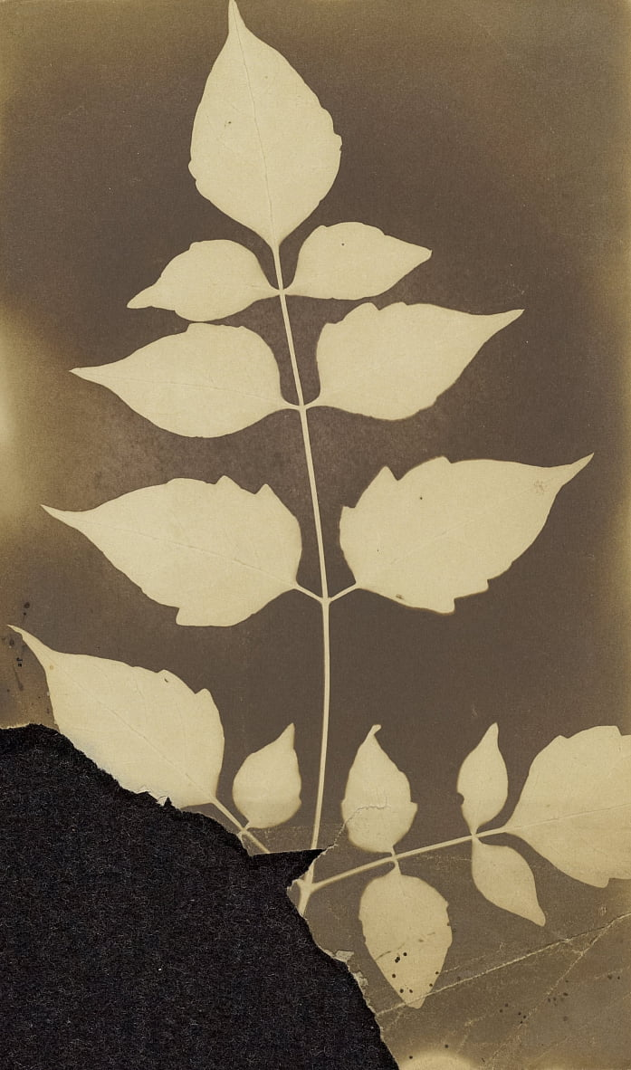 Unknown maker, British, active India about 1843 - (Branch with Leaves) by Unbekannt Unbekannt