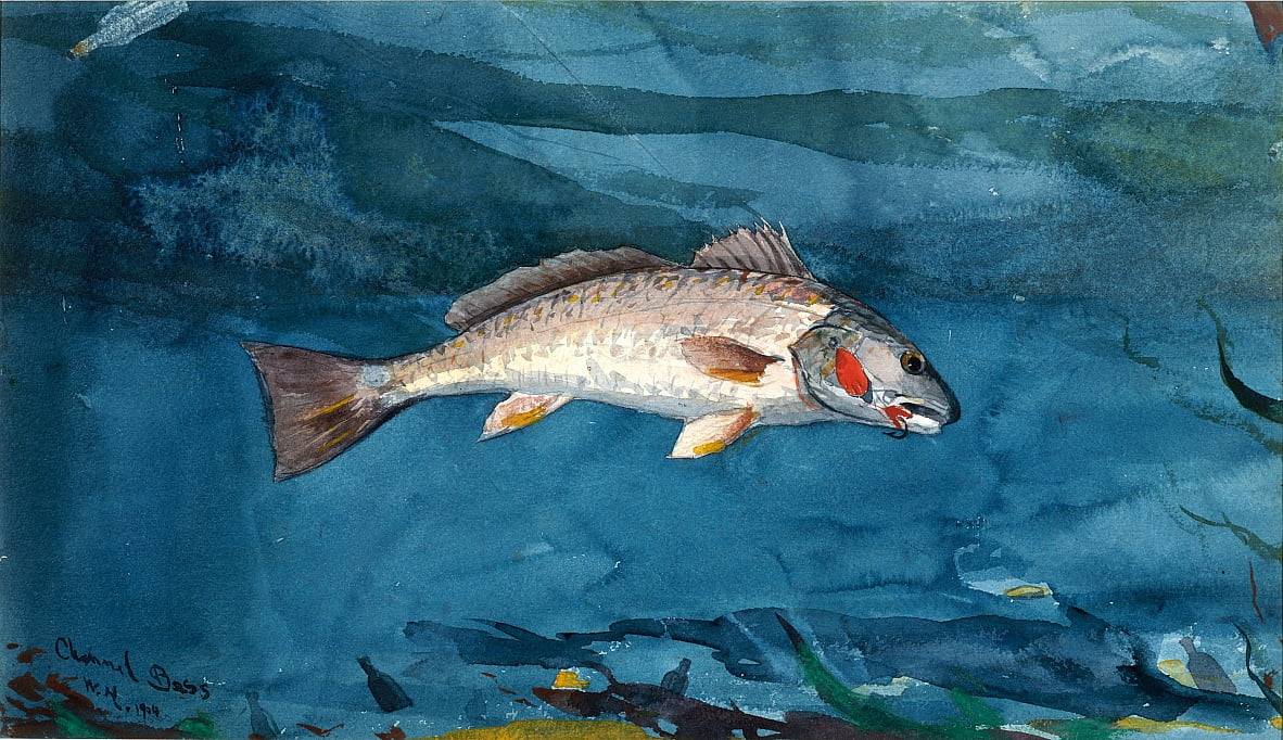 Channel Bass by Winslow Homer